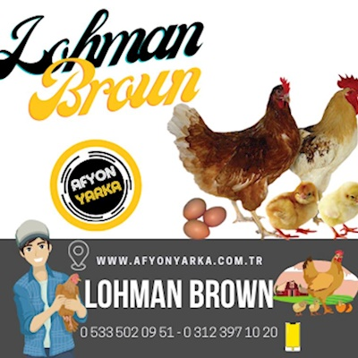 Lohman Brown Yarka